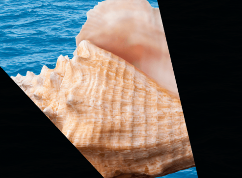 lighthouse conch